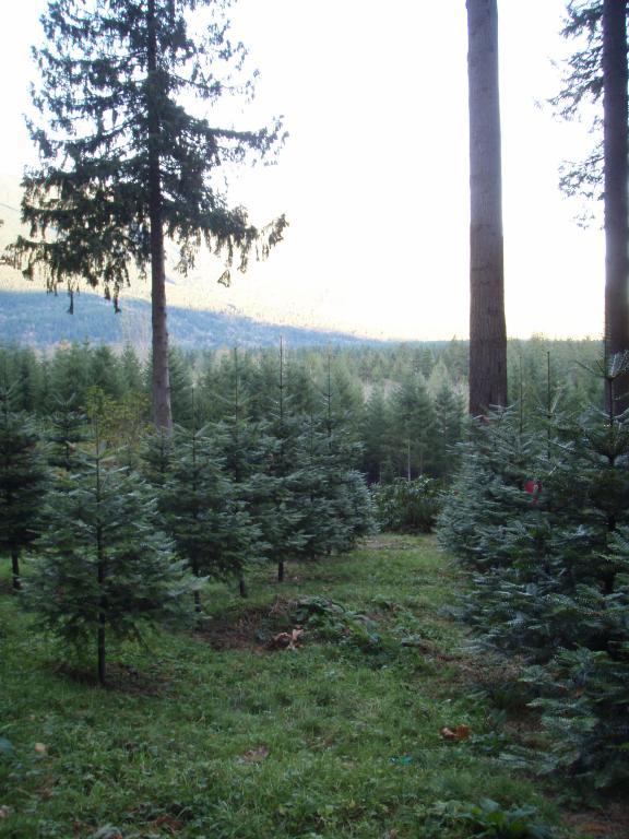 Cedar Falls Tree Farm
